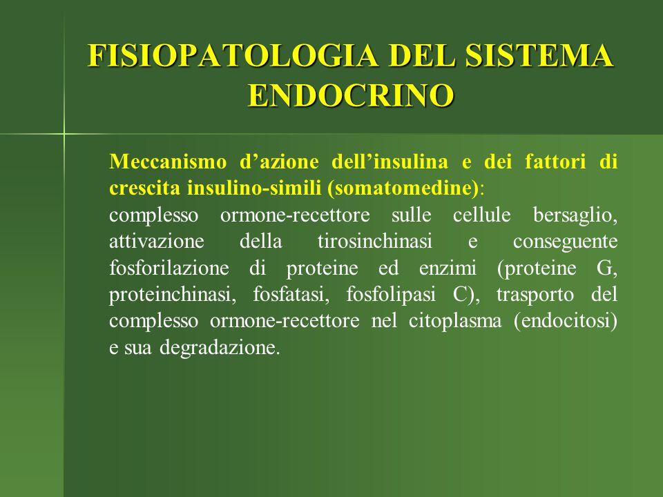 Meccanismo d'azione dell'insulina e dei fattori di crescita insulino-simili (somatomedine): complesso ormone-recettore sulle cellule bersaglio, attiva