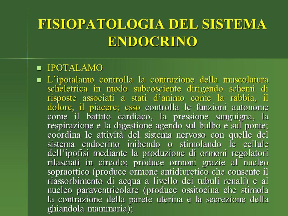 IPOTALAMO IPOTALAMO L'ipotalamo controlla la contrazione della muscolatura scheletrica in modo subcosciente dirigendo schemi di risposte associati a s