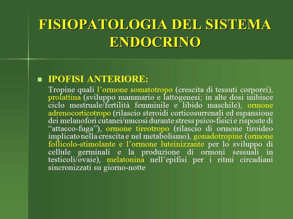 IPOFISI ANTERIORE: Tropine quali l'ormone somatotropo (crescita di tessuti corporei), prolattina (sviluppo mammario e lattogenesi; in alte dosi inibis