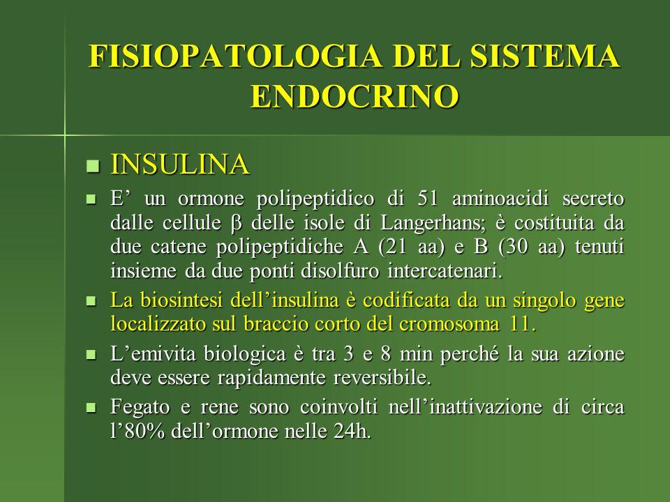 FISIOPATOLOGIA DEL SISTEMA ENDOCRINO INSULINA INSULINA E' un ormone polipeptidico di 51 aminoacidi secreto dalle cellule  delle isole di Langerhans;