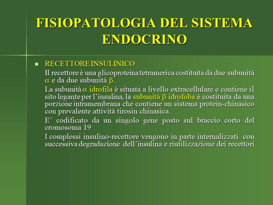 FISIOPATOLOGIA DEL SISTEMA ENDOCRINO RECETTORE INSULINICO RECETTORE INSULINICO Il recettore è una glicoproteina tetramerica costituita da due subunità