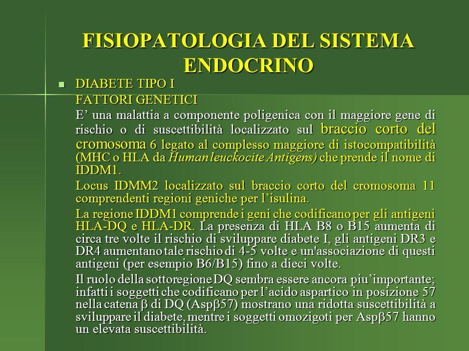 FISIOPATOLOGIA DEL SISTEMA ENDOCRINO DIABETE TIPO I DIABETE TIPO I FATTORI GENETICI E' una malattia a componente poligenica con il maggiore gene di ri