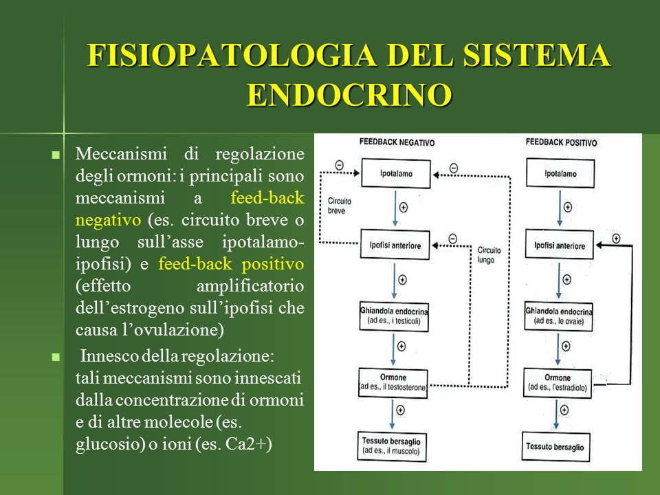 Meccanismi di regolazione degli ormoni: i principali sono meccanismi a feed-back negativo (es. circuito breve o lungo sull'asse ipotalamo- ipofisi) e