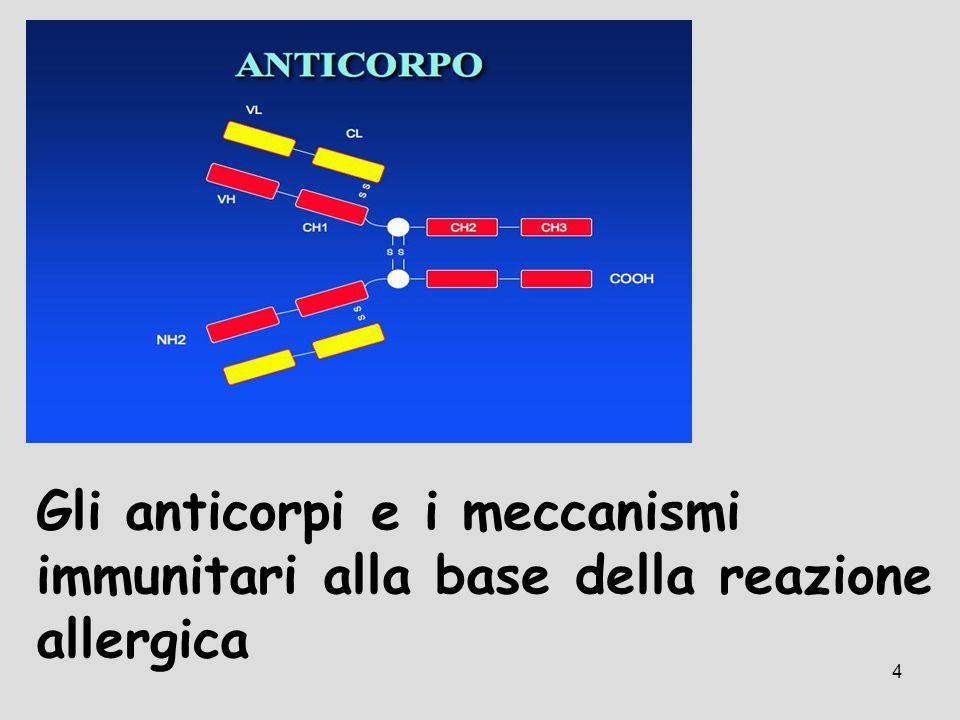 4 Gli anticorpi e i meccanismi immunitari alla base della reazione allergica