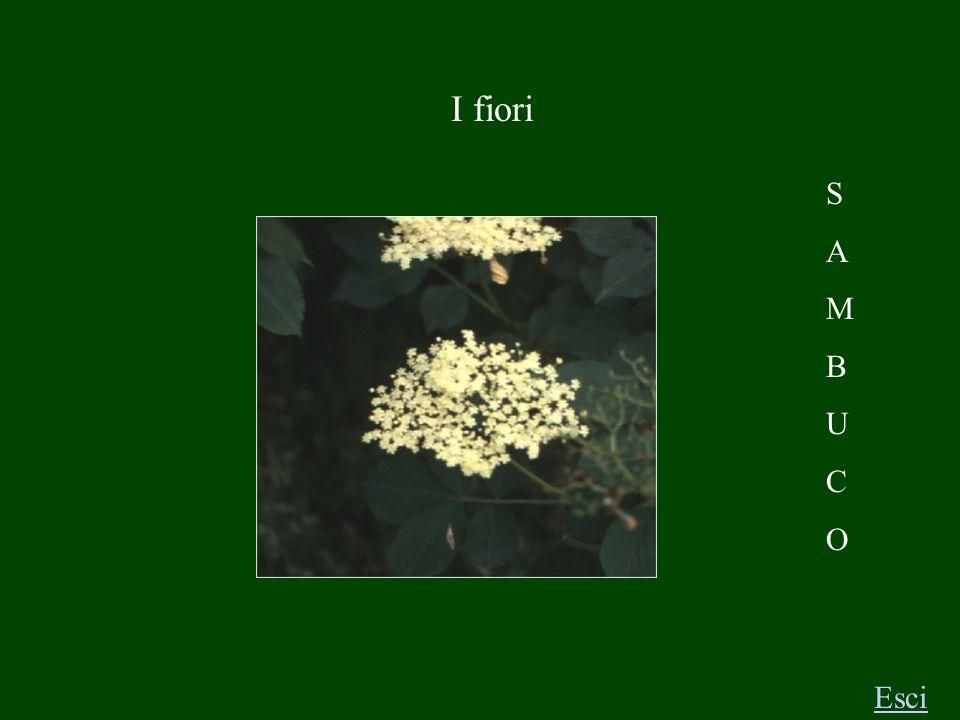 Le piante Esci F I C O