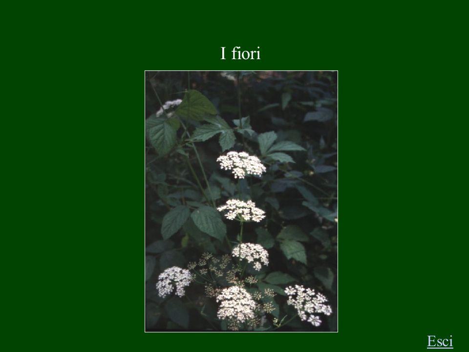 I fiori Esci