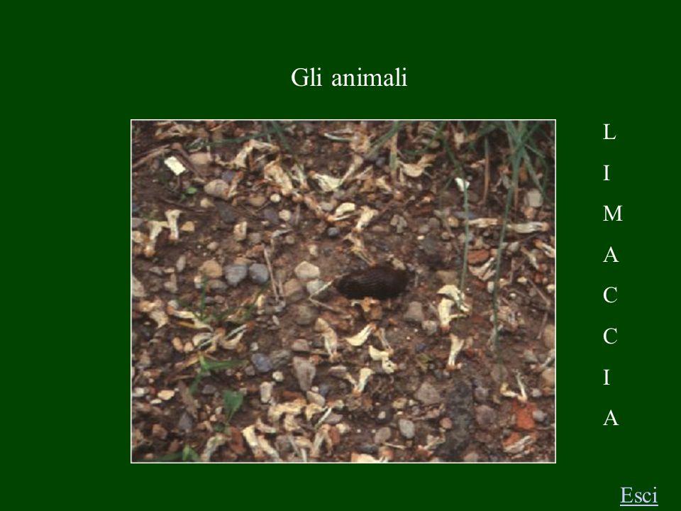 Gli animali C H I O C C I O L A