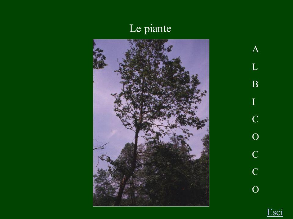 Le piante Esci A L B I C O C C O