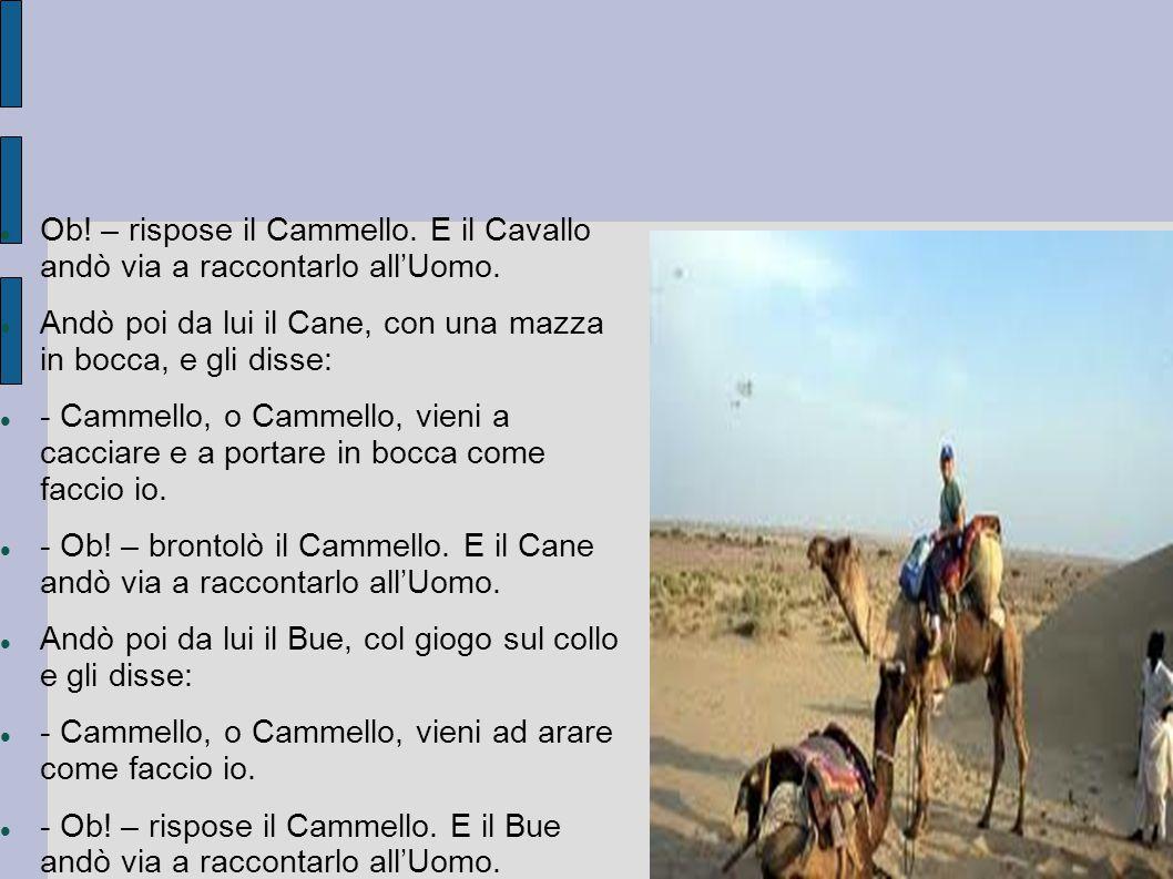 Ob! – rispose il Cammello. E il Cavallo andò via a raccontarlo all'Uomo. Andò poi da lui il Cane, con una mazza in bocca, e gli disse: - Cammello, o C