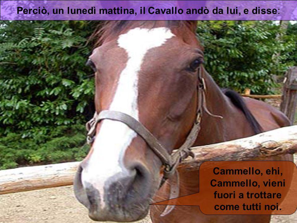 Perciò, un lunedì mattina, il Cavallo andò da lui, e disse: Cammello, ehi, Cammello, vieni fuori a trottare come tutti noi.