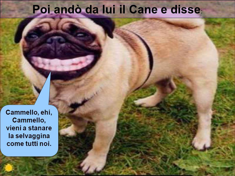 Poi andò da lui il Cane e disse : Cammello, ehi, Cammello, vieni a stanare la selvaggina come tutti noi.
