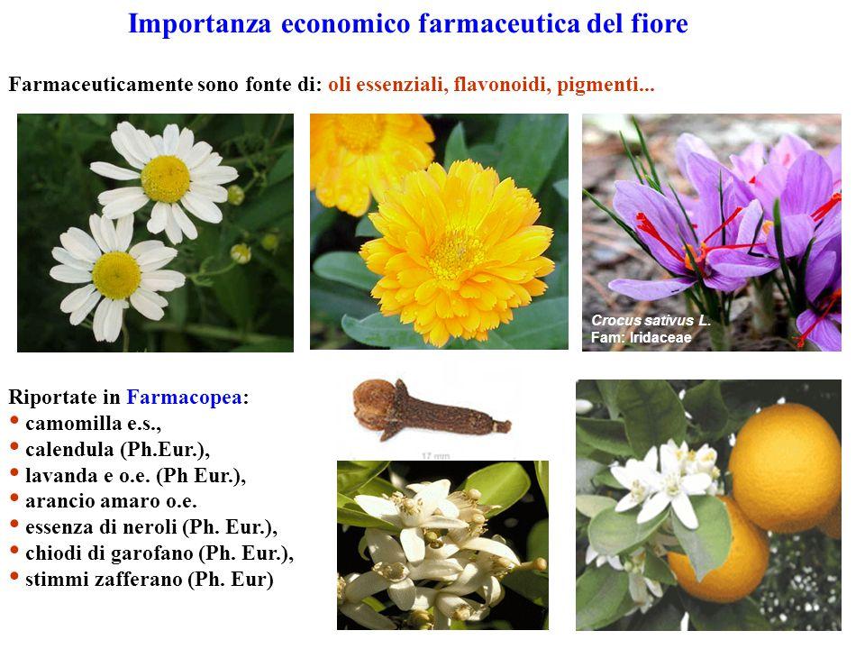 Importanza economico farmaceutica del fiore Farmaceuticamente sono fonte di: oli essenziali, flavonoidi, pigmenti... Riportate in Farmacopea: camomill