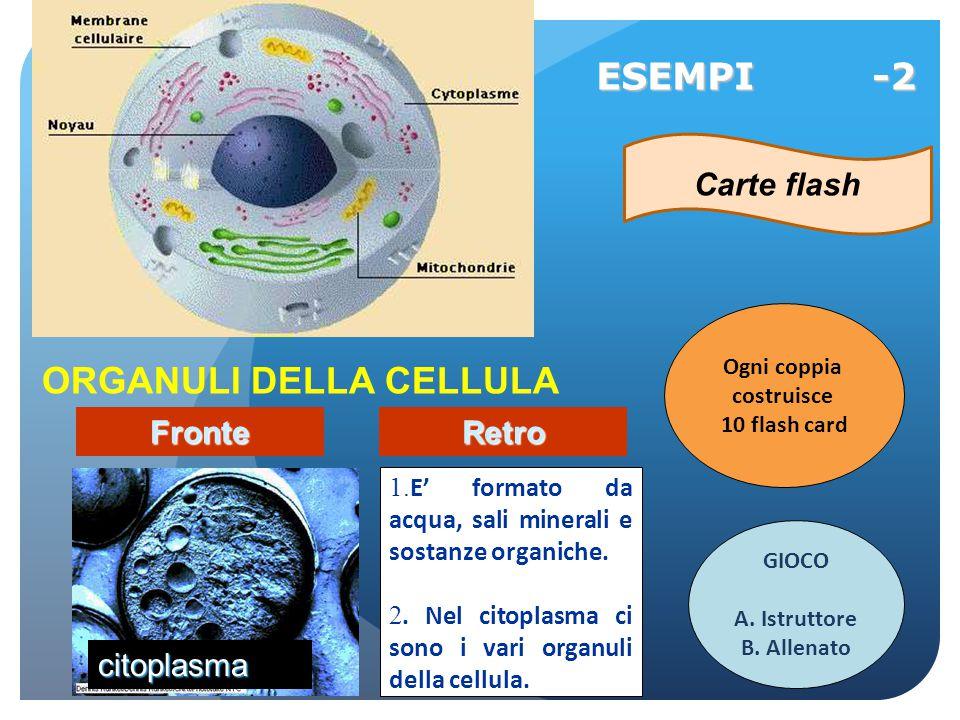 ORGANULI DELLA CELLULA 1. E' formato da acqua, sali minerali e sostanze organiche. 2. Nel citoplasma ci sono i vari organuli della cellula. ESEMPI -2