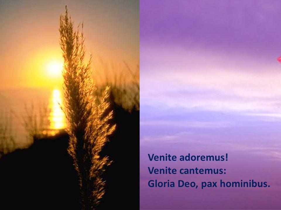 Venite adoremus! Venite cantemus: Gloria Deo, pax hominibus.