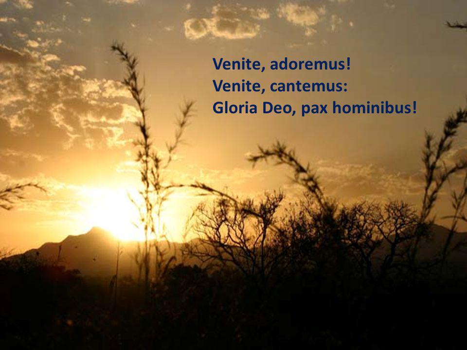 Venite, adoremus! Venite, cantemus: Gloria Deo, pax hominibus!