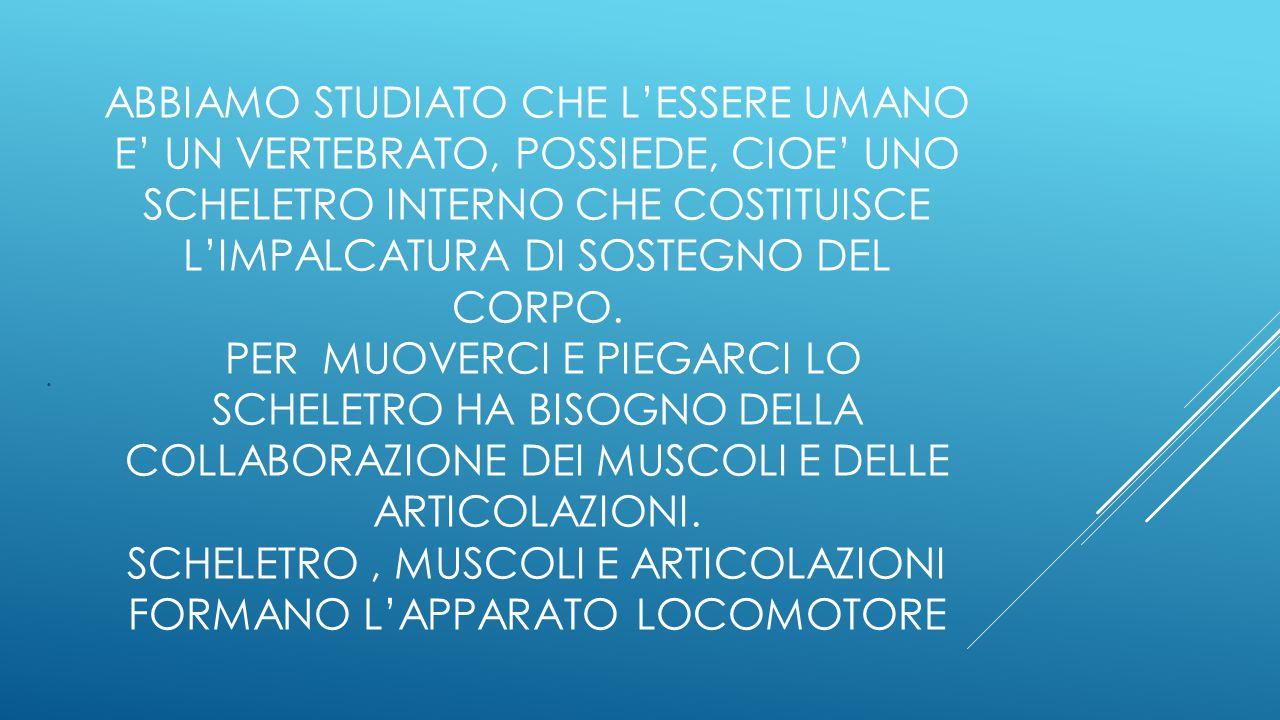 CLASSE QUINTA A OGGI LEZIONE DI SCIENZE L'APPARATO LOCOMOTORE