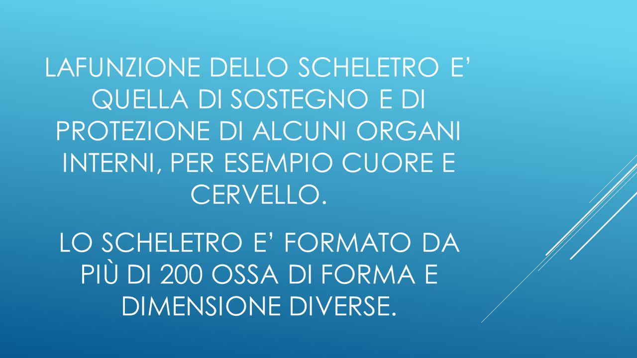 LO SCHELETRO E' FORMATO DA PIÙ DI 200 OSSA DI FORMA E DIMENSIONE DIVERSE.
