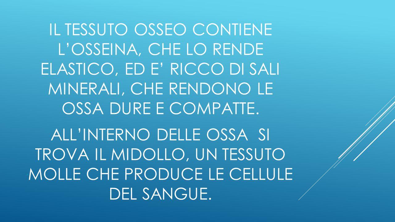 IL TESSUTO OSSEO CONTIENE L'OSSEINA, CHE LO RENDE ELASTICO, ED E' RICCO DI SALI MINERALI, CHE RENDONO LE OSSA DURE E COMPATTE.
