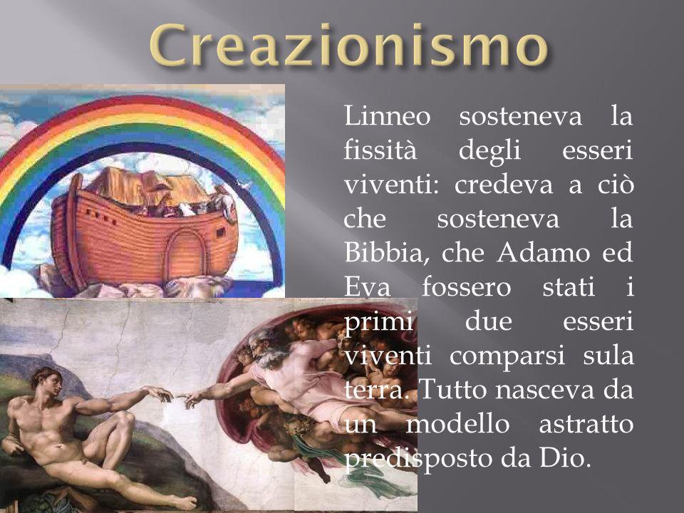 Linneo sosteneva la fissità degli esseri viventi: credeva a ciò che sosteneva la Bibbia, che Adamo ed Eva fossero stati i primi due esseri viventi com