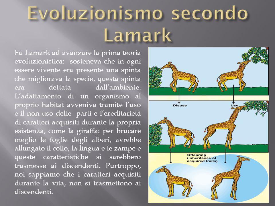 Fu Lamark ad avanzare la prima teoria evoluzionistica: sosteneva che in ogni essere vivente era presente una spinta che migliorava la specie, questa s