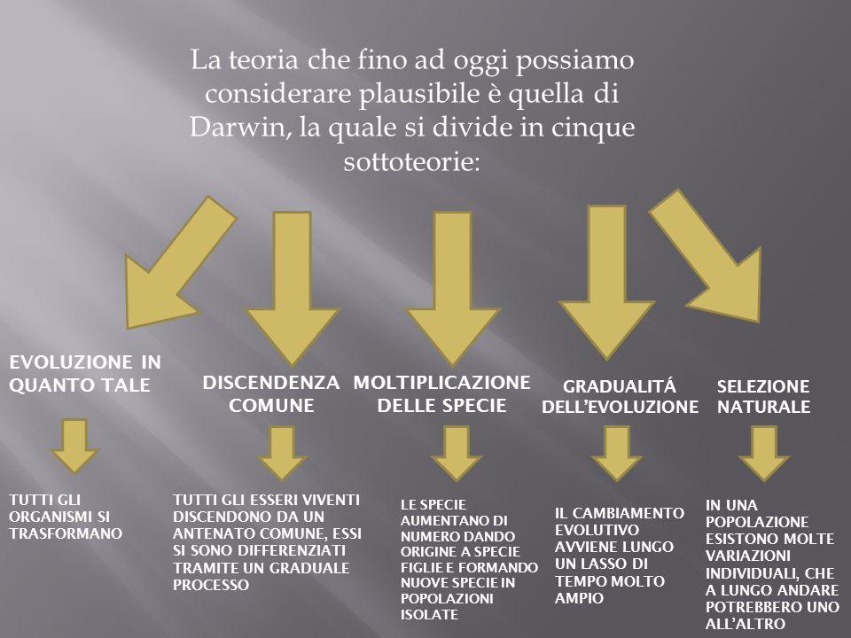 La teoria che fino ad oggi possiamo considerare plausibile è quella di Darwin, la quale si divide in cinque sottoteorie: EVOLUZIONE IN QUANTO TALE TUT