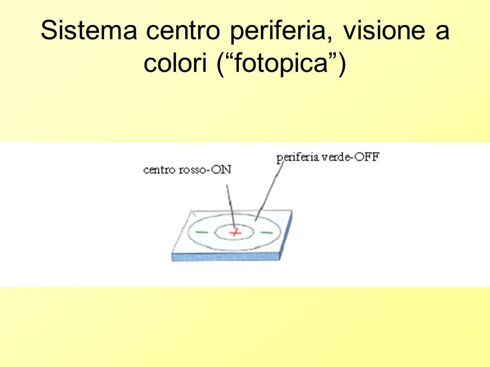Sistema centro periferia, visione a colori ( fotopica )