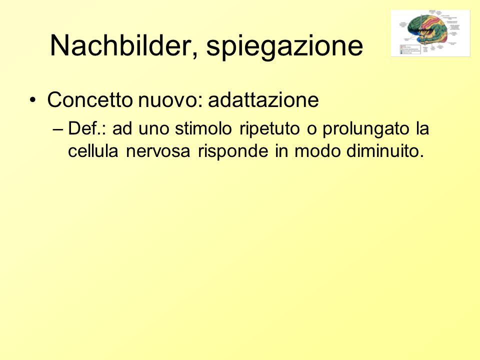 Nachbilder, spiegazione Concetto nuovo: adattazione –Def.: ad uno stimolo ripetuto o prolungato la cellula nervosa risponde in modo diminuito.