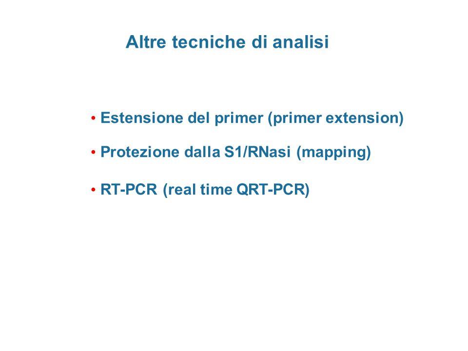 Altre tecniche di analisi Estensione del primer (primer extension) Protezione dalla S1/RNasi (mapping) RT-PCR (real time QRT-PCR)