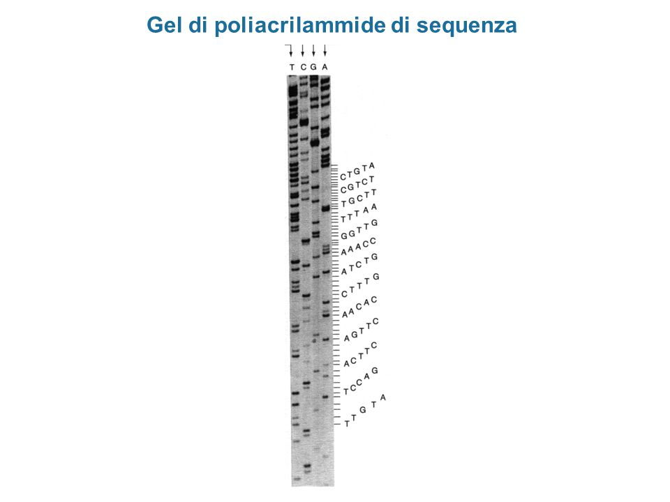 B. LEWIN, IL GENE - Edizione compatta, Zanichelli Editore S.p.A. Copyright © 2007 Vettori episomali