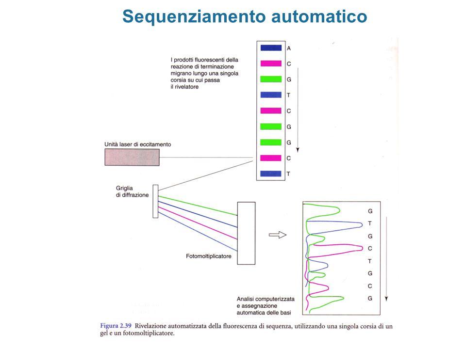 Sistemi di espressione In vitro (estratti cellulari) In vivo (cellule in coltura) Animali transgenici