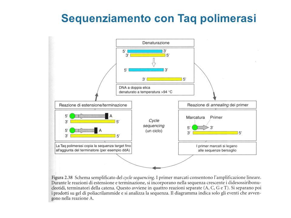 Sequenziamento con Taq polimerasi