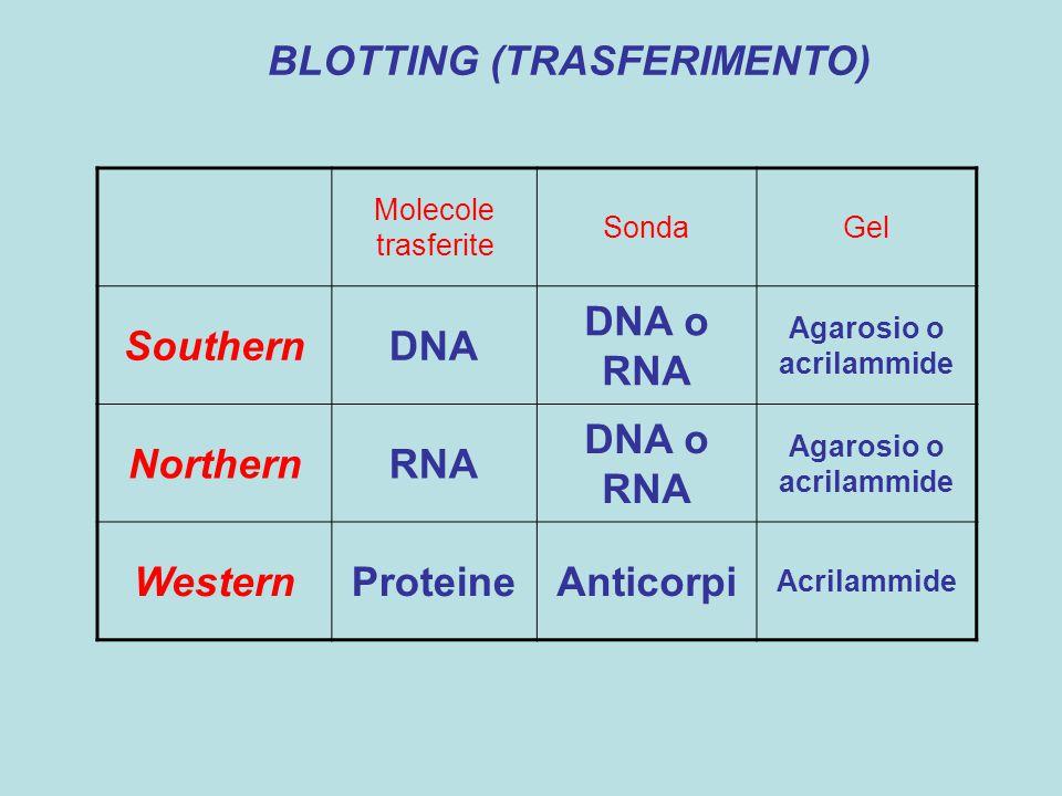 Analisi di espressione con Northern blot