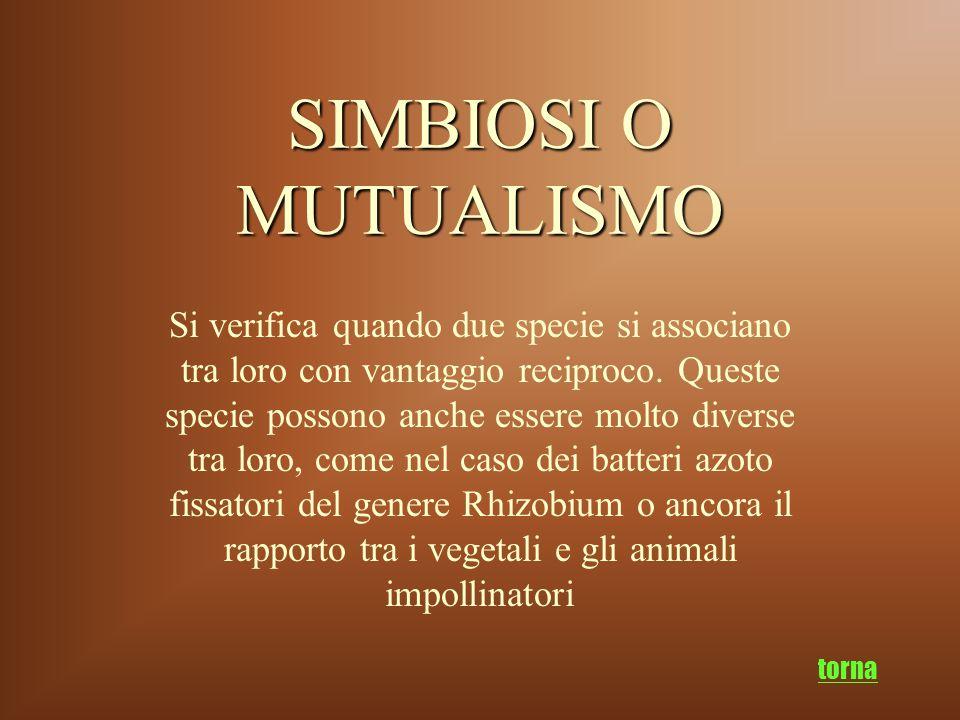 SIMBIOSI O MUTUALISMO Si verifica quando due specie si associano tra loro con vantaggio reciproco. Queste specie possono anche essere molto diverse tr