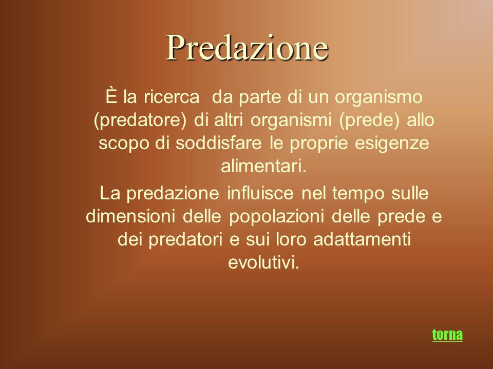 Predazione È la ricerca da parte di un organismo (predatore) di altri organismi (prede) allo scopo di soddisfare le proprie esigenze alimentari. La pr
