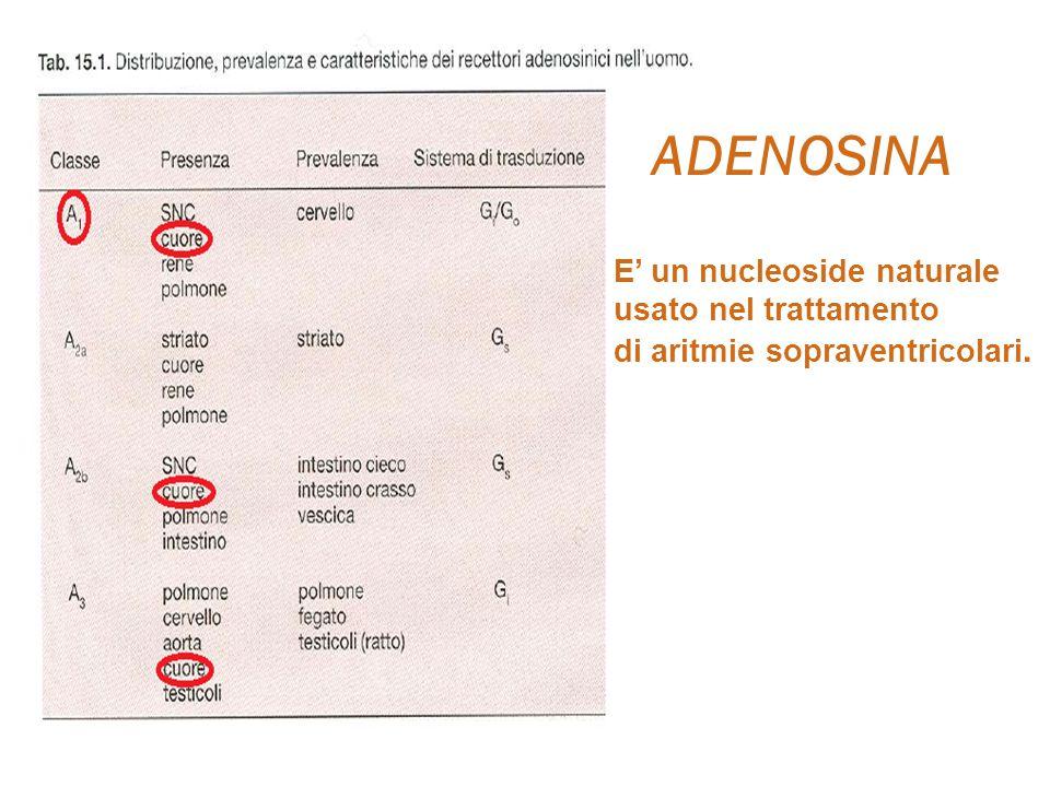 ADENOSINA E' un nucleoside naturale usato nel trattamento di aritmie sopraventricolari.