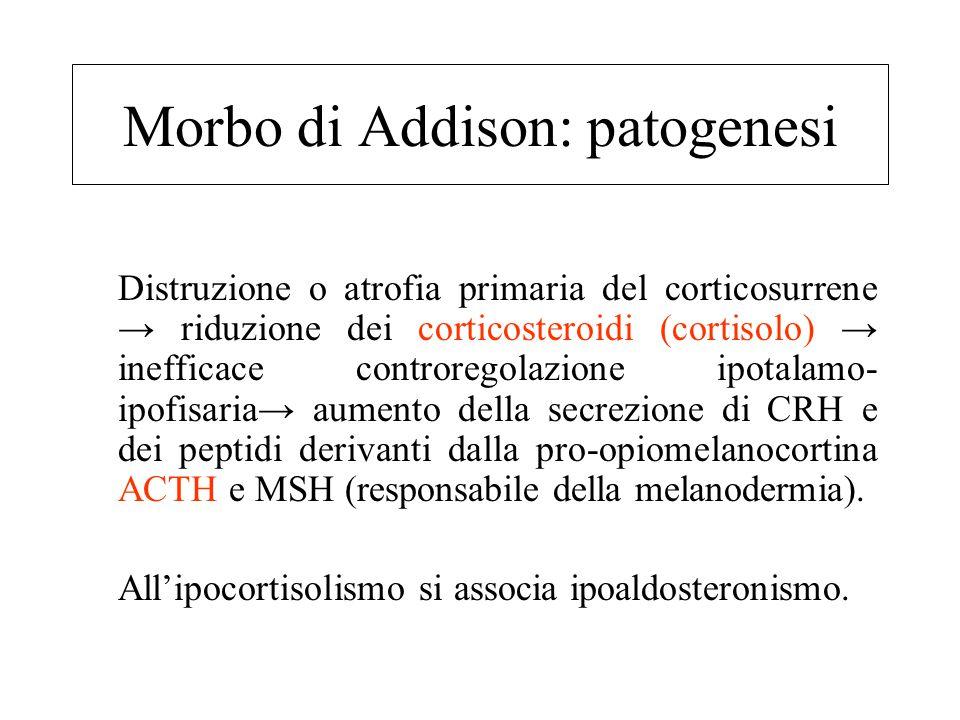 Morbo di Addison La forma più frequente è quella autoimmune caratterizzata da un'infiltrazione di linfociti T citotossici, che porta all'atrofia bilat