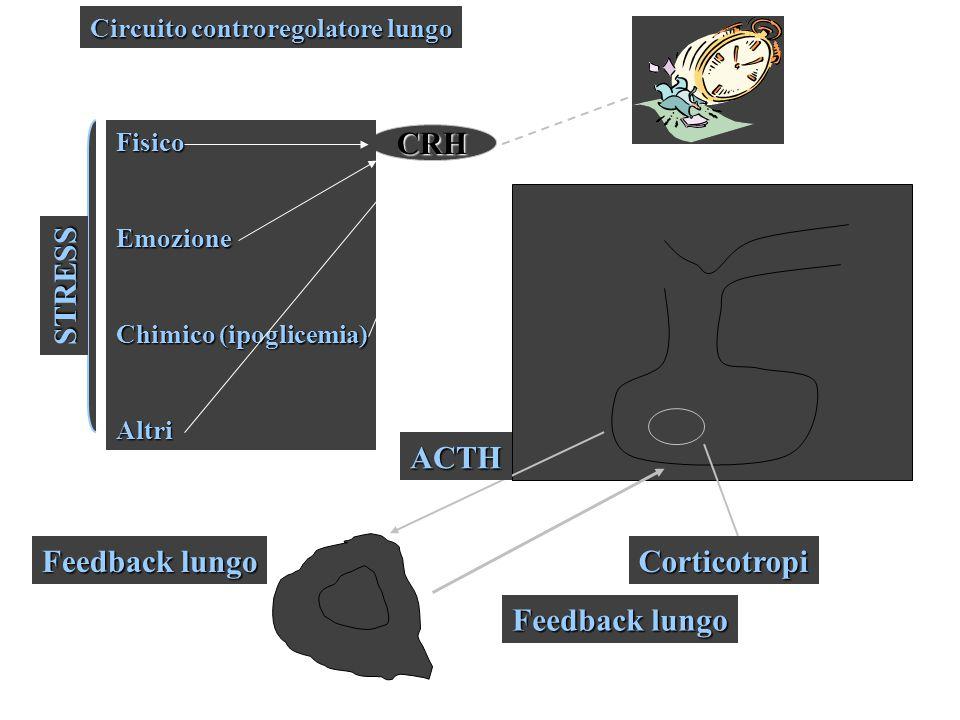 CRH FisicoEmozione Chimico (ipoglicemia) Altri STRESS Circuito controregolatore lungo ACTH Feedback lungo Corticotropi