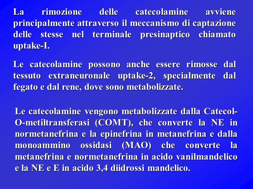 OH NH 2 CO 2 H Tirosina (alpha metilparatirosina) Tirosina idrossilasi (cAMP protein kinase, Glucocorticoid) Diidrossifenilalanina (DOPA) Dopamina Nor
