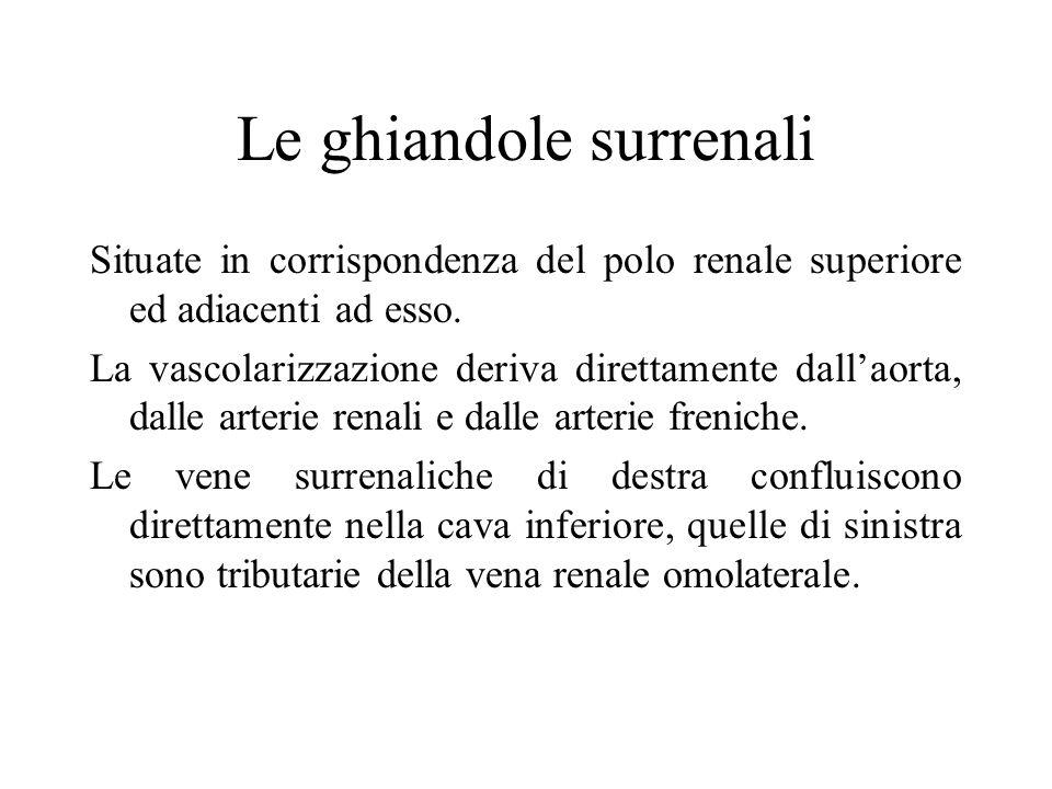 Le ghiandole surrenali Situate in corrispondenza del polo renale superiore ed adiacenti ad esso.
