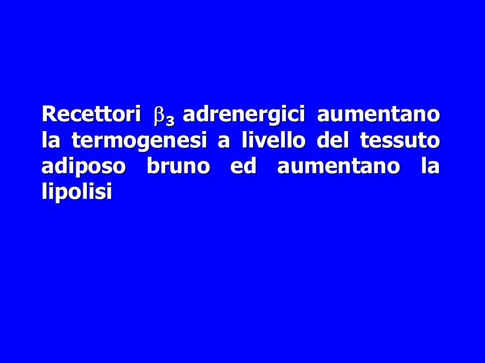 Recettori  Adrenergici Sottotipo     AgonistiIsoprotenerolo, Epinefrina, NE  DenopaminaTerbutalina, Clenbuterolo Albuterolo AntagonistiPr
