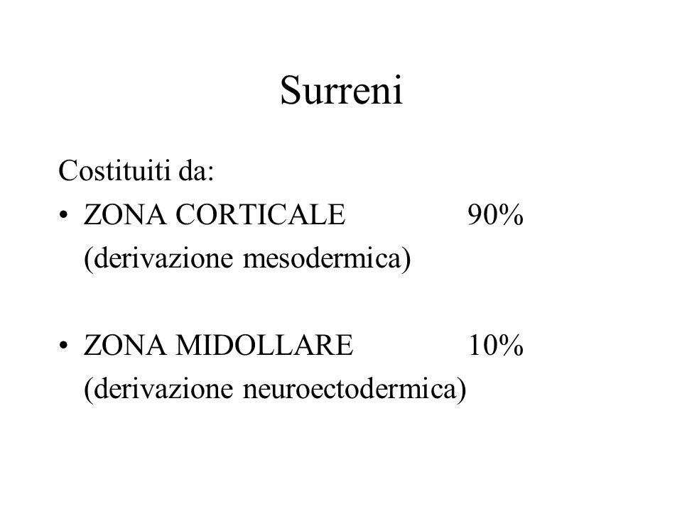 Surreni Costituiti da: ZONA CORTICALE 90% (derivazione mesodermica) ZONA MIDOLLARE10% (derivazione neuroectodermica)