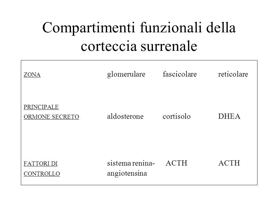 Compartimenti funzionali della corteccia surrenale ZONA glomerularefascicolarereticolare PRINCIPALE ORMONE SECRETO aldosteronecortisoloDHEA FATTORI DI sistema renina- ACTHACTH CONTROLLO angiotensina