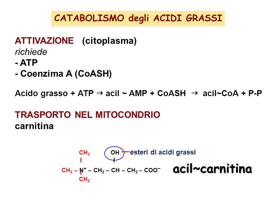 CATABOLISMO degli ACIDI GRASSI ATTIVAZIONE (citoplasma) richiede - ATP - Coenzima A (CoASH) Acido grasso + ATP  acil ~ AMP + CoASH  acil~CoA + P-P T