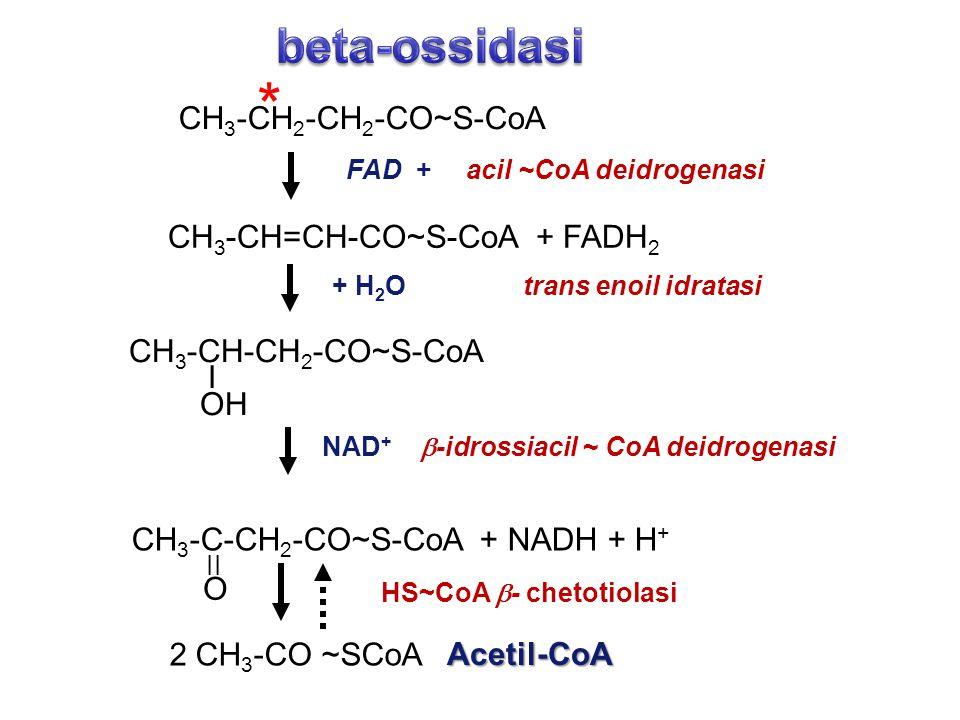 CH 3 -CH 2 -CH 2 -CO~S-CoA CH 3 -CH=CH-CO~S-CoA + FADH 2 CH 3 -CH-CH 2 -CO~S-CoA I OH 2 CH 3 -CO ~SCoA FAD + acil ~CoA deidrogenasi + H 2 O trans enoi