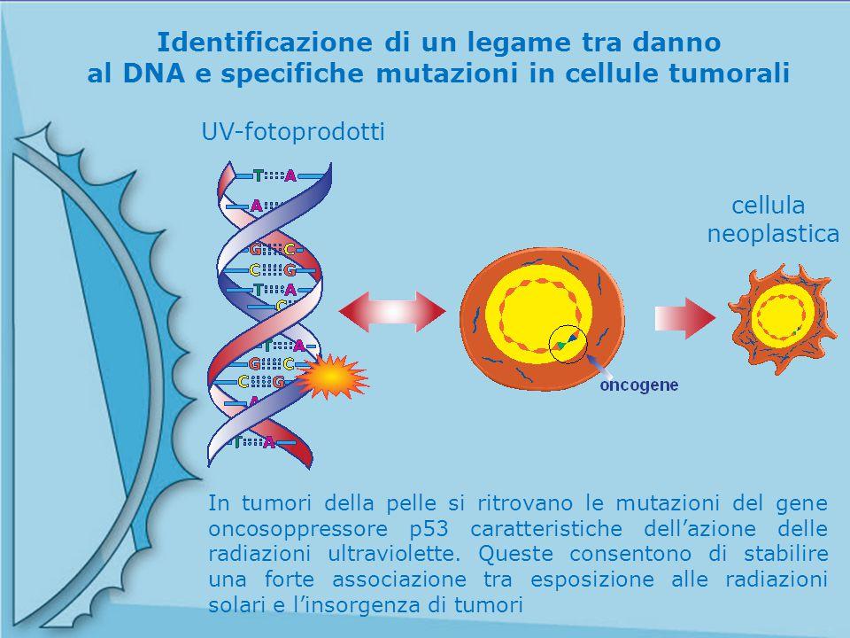 Identificazione di un legame tra danno al DNA e specifiche mutazioni in cellule tumorali UV-fotoprodotti In tumori della pelle si ritrovano le mutazio