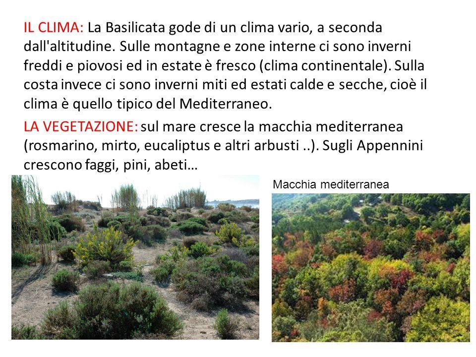 IL CLIMA: La Basilicata gode di un clima vario, a seconda dall'altitudine. Sulle montagne e zone interne ci sono inverni freddi e piovosi ed in estate