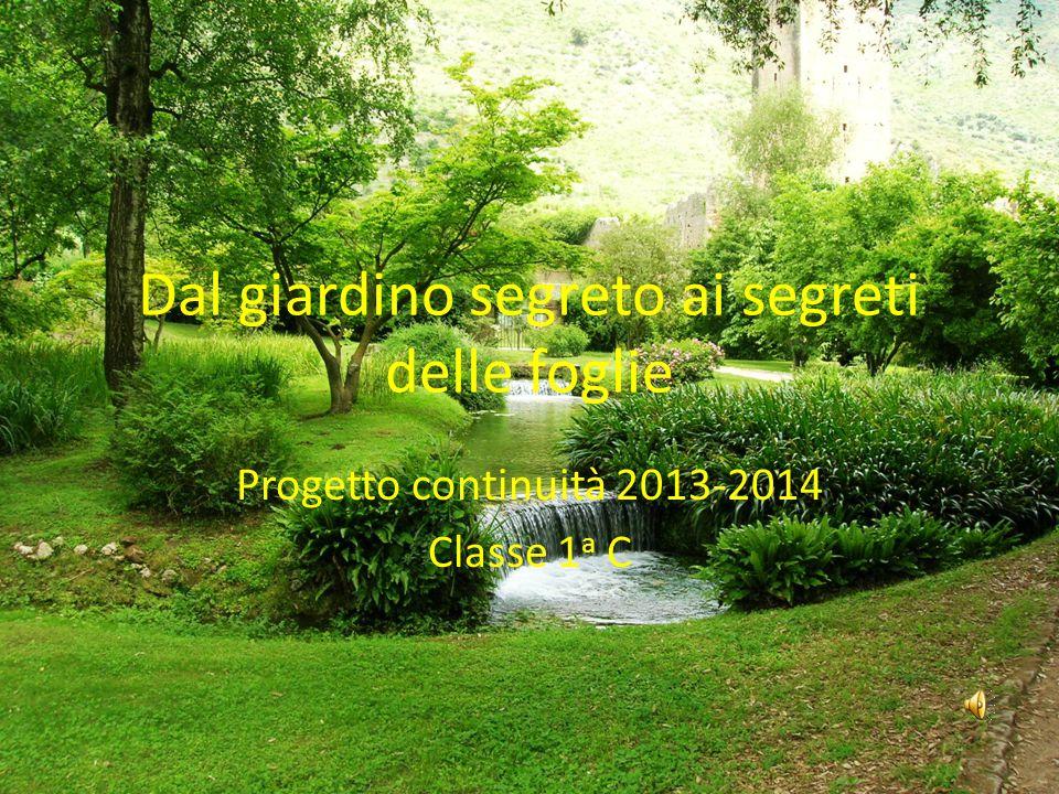 Dal giardino segreto ai segreti delle foglie Progetto continuità 2013-2014 Classe 1 a C