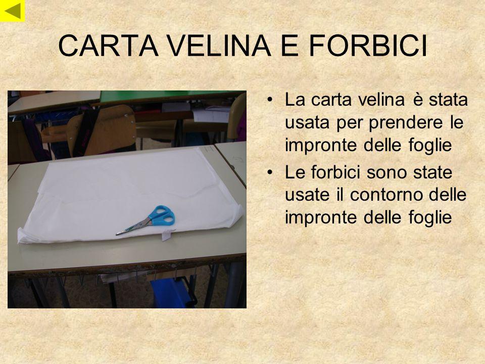 CARTA VELINA E FORBICI La carta velina è stata usata per prendere le impronte delle foglie Le forbici sono state usate il contorno delle impronte dell