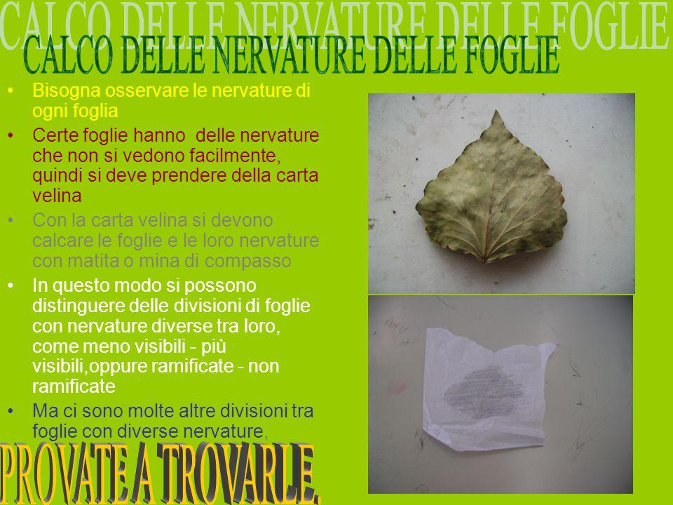 Bisogna osservare le nervature di ogni foglia Certe foglie hanno delle nervature che non si vedono facilmente, quindi si deve prendere della carta vel