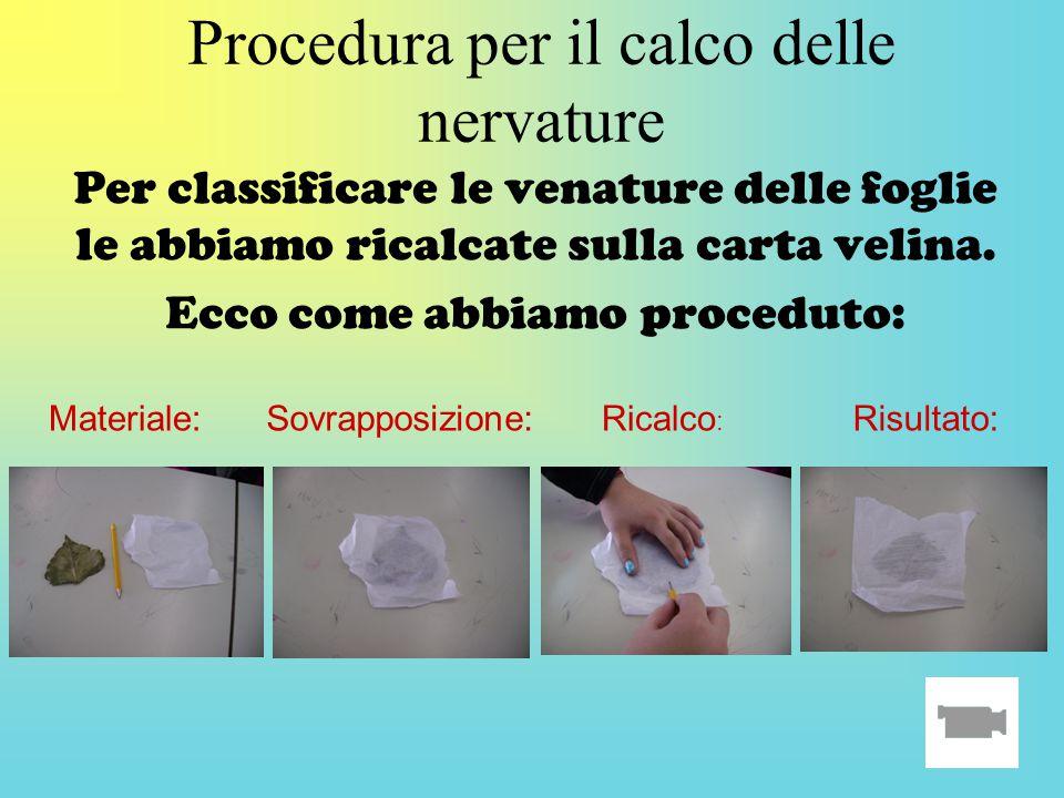 Procedura per il calco delle nervature Per classificare le venature delle foglie le abbiamo ricalcate sulla carta velina. Ecco come abbiamo proceduto: